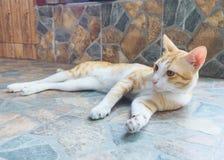 猫看 免版税库存照片