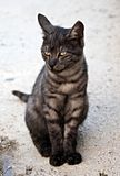 猫眼桔子 库存图片