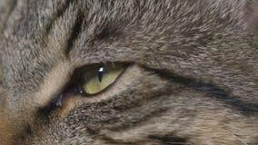年轻猫眼特写镜头  股票录像