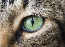 猫眼特写镜头  图库摄影