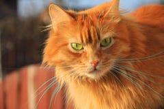 猫眼绿化红色 图库摄影