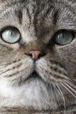 猫眼s 免版税库存图片