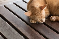 紧紧猫睡眠在木桌上 库存照片