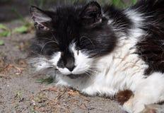 猫睡眠 免版税库存图片