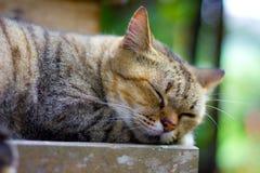 猫睡眠 图库摄影