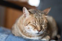 猫睡眠 库存照片