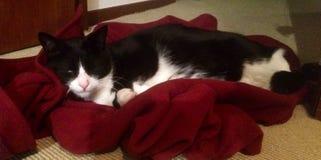 猫睡着在夹克 免版税图库摄影