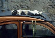 猫睡着在汽车的屋顶 库存照片