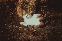 猫睡着的树 免版税库存图片