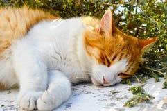 猫睡觉在墙壁顶部 库存图片