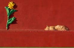 猫睡觉在红色墙壁背景中的,猫在一个晴天睡觉在红色背景中的,猫在维兹iz Zurrieq,马耳他,猫和好关于 免版税库存图片