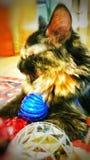 猫睡觉装饰 库存图片
