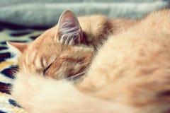 猫睡觉 免版税库存照片