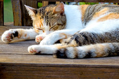 猫睡觉 图库摄影