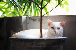 猫睡觉 库存照片