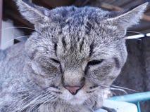 猫睡过头了 免版税库存照片