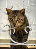 猫神色通过一个古色古香的门 免版税库存照片