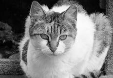 猫神色黑白射击  免版税库存图片