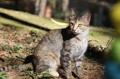 猫神色 免版税库存图片