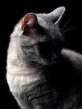 猫秘密 免版税库存图片