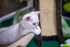 猫空白的一点 免版税库存图片