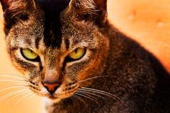 猫穿上我混乱照片t 免版税库存照片