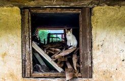 猫窗口 免版税库存照片