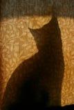猫窗帘剪影 库存照片