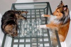 猫竞争狗 免版税库存照片
