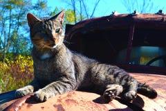 猫等待 免版税图库摄影