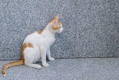猫红色坐的白色 免版税库存图片