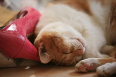 猫红头发人 库存图片