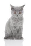 猫纵向年轻人 免版税图库摄影
