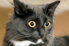 猫纵向年轻人 图库摄影