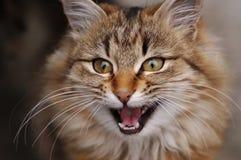 猫纵向惊奇了 免版税库存图片
