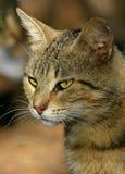猫纵向街道 库存照片