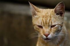猫纵向黄色 库存照片