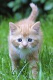 猫纵向 图库摄影