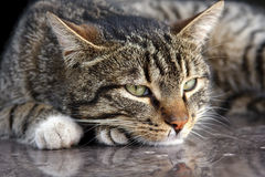 猫纵向 库存照片