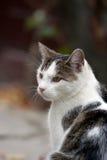 猫纵向 免版税图库摄影