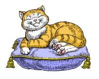 猫纵容了 免版税库存照片