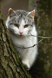 猫结构树 库存图片