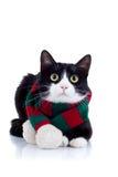 猫绿色红色围巾佩带 免版税库存图片