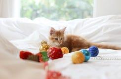 猫缅因说谎和使用与圣诞节decoratio的浣熊小猫 库存图片