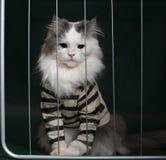 猫罪犯关在监牢里 免版税库存照片
