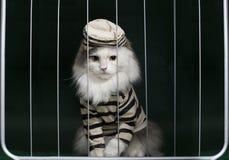 猫罪犯关在监牢里 免版税图库摄影