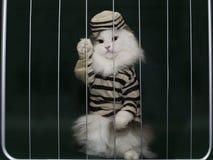 猫罪犯关在监牢里 库存照片
