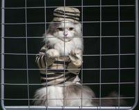猫罪犯关在监牢里 免版税库存图片