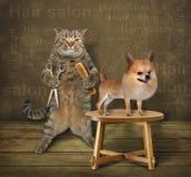 猫美发师和狗 图库摄影