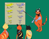 猫老师 免版税库存图片